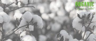 Bio-Baumwolle (organic cotton)